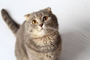6 Children's Stories About Cats